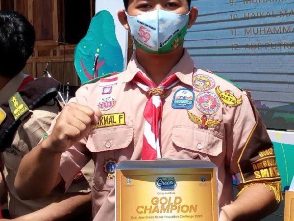 Gold Champion East Java Green Scout